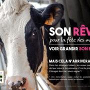 17 raisons produits laitiers