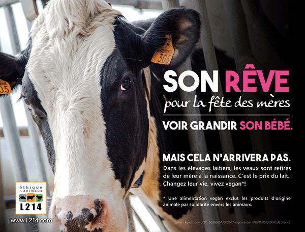 b439fd9c27b 17 raisons d arrêter les produits laitiers